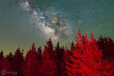 Red Trees with a Milky Way on top at Spruce Knob WV [OC][2048x1365]
