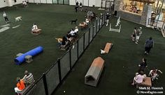 indoor dog park for anyone 3 separate ones for small medium and large dogs