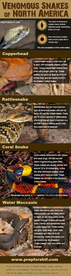 Venomous Snakes of The United States Infographic