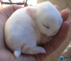Baby Rabbit sleeping 3