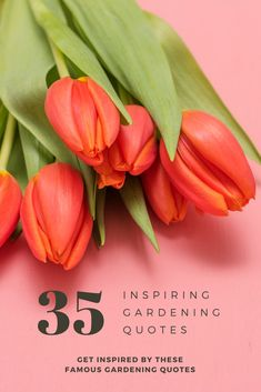 Get inspired by these famous gardening quotes and old proverbs. Read words of wisdom on plants, flowers, weeds and what gardening means to us all Root Vegetables, Organic Vegetables, Gardening For Beginners, Gardening Tips, Famous Gardens, Flower Garden Design, Tomato Cages, Garden Quotes, Quotes By Famous People