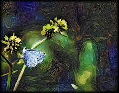 Sktchy art by Pam Blackstone Follow @Fractallicious on Twitter #sktchy #ipadart #ipadartist #icolorama #metabrush #iseriesart #mobileartistry #bpa_graphics #ma_creative #pf_arts #rsa_graphics #wow_magix #wow_graphix #fx_hdr  #loves_edits  #super_photoeditz  #mybest_digitalimaging #thednalife #unitedbyedit #editallstarz #dekradakz  #flowers #butterfly #dreamscope