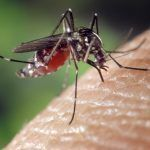 10 ways to get rid of mosquitoes