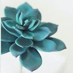 #succulent #sugarflower #gumpasteflower #sugarcraft #sugarart #korea #sugarazalea