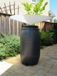 a freestanding water collection unit from rainsaucers.com. I saw this on This Old House of all places.