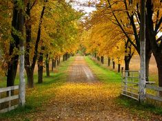 love the long driveway, lined with trees!