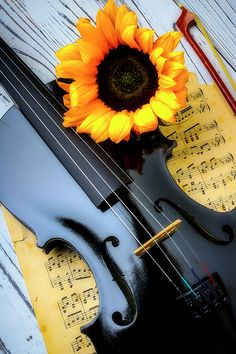 Sunflowerand Black Violin by Garry Gay Violin Photography, Fine Art Photography, Nature Photography, Violin Art, Violin Music, Mood Wallpaper, Music Wallpaper, Beautiful Landscape Photography, Beautiful Landscapes