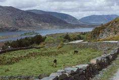 Irland 1978 - ETH-Bibliothek | Crowdsourcing Dublin, Mountains, Nature, Blog, Travel, Ireland, Postcards, Naturaleza, Viajes