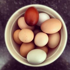 Dare to Dream Eggs, too pretty to eat...almost!  Our lovely egg supplier from Lompoc.
