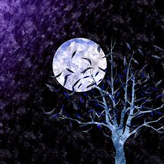 willow tree and night sky - Google Search