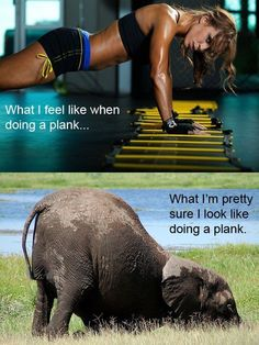 That elephant is exactly what I look like when doing a plank...but hey, if I can eventually look like the top picture, I'll happily look like the elephant until then! :D