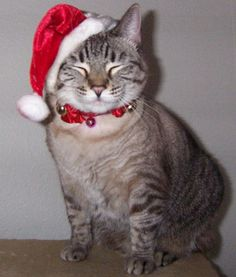 kitty cats christmas pictures | christmas cats picture gallery luna pictures of cats enjoying the ...
