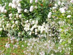 Flowers in the gardens of the Chateau de la Chatonnière, whites and tender green.