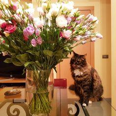 Giada si lecca i baffi ...  #gatti #cats #fiori #flowers #baffi #cats #gatti #Giada #lecca Cats, Flowers, Italian Foods, Gatos, Kitty, Cat, Flower, Blossoms