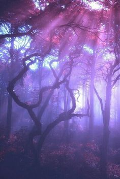 """The post """"photography Cool dark pink purple nature forest wonderland pastel goth gothic pastel goth mystic hellxno"""" appeared first on Pink Unicorn Forest Purple Haze, Shades Of Purple, Pink Purple, Light Purple, Purple Unicorn, Unicorn Nails, Periwinkle, Deep Purple, Violet Aesthetic"""