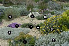 1 : Euphorbia rigida 2 : Ballota acetabulosa 3 : Cerastium candidissimum 4…