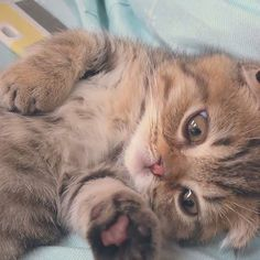 Cute Baby Cats, Cute Baby Animals, Kittens Cutest, Funny Animals, Cats And Kittens, Beautiful Kittens, Pretty Cats, Animals Beautiful, Cute Animal Pictures