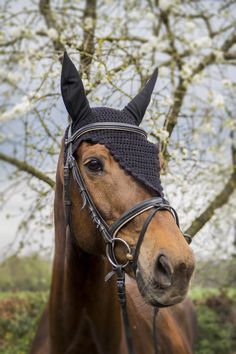 Order your own black extra long fly bonnet for your horse or pony. Super nice fly veil for your horse or pony. Perfect for competition or training. So order now! Bay Horse, Horse Fly, Horse Horse, Dressage Bridle, Black Fly, Long Black, Equestrian Gifts, Equestrian Fashion, Most Beautiful Horses