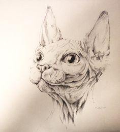 Sphynx Cat Pen Doodle by kidbrainer.deviantart.com on @deviantART
