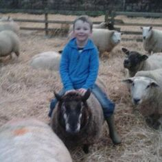 Ride 'em cowboy / #sheep boy!!! Doesn't look she minds too much mind you!!! #YoungFarmer #Lambing2015 #YFC #FamingFamily