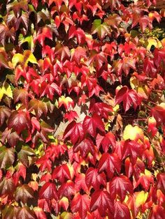 #color #leafs