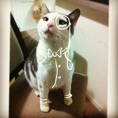 This is Bob. | Instagram Artist Digitally Doodles On Cats And It's Great