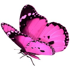 butterfly ❤ liked on Polyvore featuring butterflies, backgrounds, fillers, pink and animals