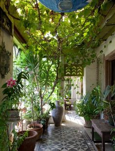 Garden room filled with plants