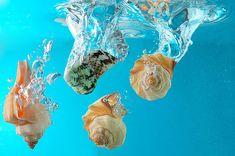 seashell shared by Niwa Daisuke on We Heart It