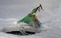 oiseaux exotiques liste - Recherche Google
