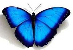 Otra mariposa azul!