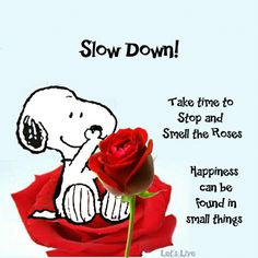 Slow Down! Take time to stop and smell the roses. Happiness can be found in little things. Snoopy wisdom