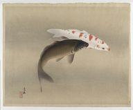 Carp. Japanese. Woodblock print. Artist: Komori Soseki (active 1910 - 1920)
