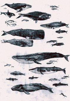baleias, muitas baleias