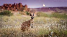 Kangaroo Sunrise by Michael Wiejowski on 500px