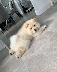 Super Cute Puppies, Cute Baby Dogs, Cute Little Puppies, Cute Cats And Dogs, Cute Dogs And Puppies, Cute Little Animals, Cute Funny Animals, Doggies, Fluffy Dogs