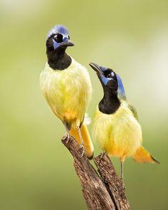 #birdwatchingtips