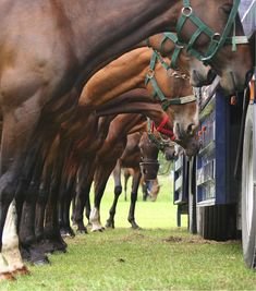 paarden netjes in de rij !