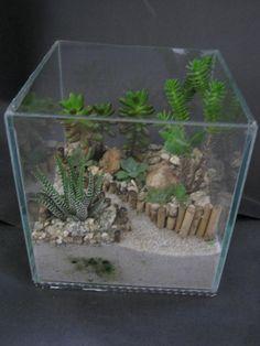 Good use of layers and staggered heights Succulent Bowls, Succulent Centerpieces, Planting Succulents, Cactus Terrarium, Garden Terrarium, Miniature Zen Garden, Aquarium Garden, Plant Projects, Paludarium