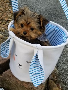 Shorkie puppy in an Easter basket. Yorkie Breeders, Shorkie Puppies, Easter Baskets, Shih Tzu, Animals, Dog Cat, Gatos, Animales, Animaux