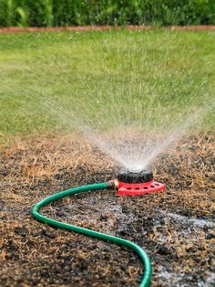 When repairing your lawn, don't forget to water it well! Click through for our best how-to repair your lawn: http://www.bhg.com/gardening/yard/lawn-care/how-to-fix-lawn/?socsrc=bhgpin061614waterarepairedlawnwell&page=7