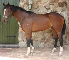 Seraphim Seraphim is an incredibly determined two year old colt which will be a top class racehorse with maturity. He...