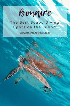Best Scuba Diving, Scuba Diving Gear, Cave Diving, Big Island Hawaii, Island Beach, Diving School, Diving Course, Maui Vacation, Beaches In The World