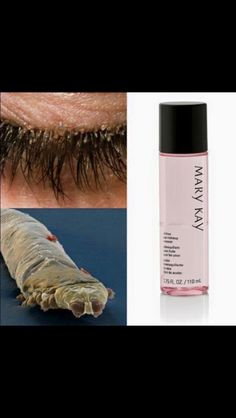 Ladies, are you sleeping with your mascara on? After you read this, you won't be doing it anymore!  Eyelash mites are real, and here's a picture. They are called Demodex, which is a genus of tiny parasitic mites that live in or near hair follicles of mammals. Around 65 species of Demodex known. After not washing the mascara off for ONE night, these mites have already started eating at your mascara. With Mary Kay's #1 Oil-Free Eye Makeup Remover, it's fast, simple, and gentle on your eyes
