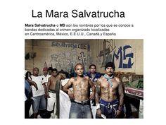 MS13 Sumo, Wrestling, Salvador, Sports, Ms 13 Gang, Crime, Dancing, Bands, People