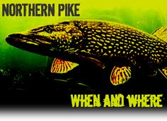 Northern Pike – When and Where? Ice Fishing, Fishing Boats, Fishing Stuff, Pike Fishing Tips, Drop Shot Rig, Favorite Pastime, Predator, The Locals, Hunting