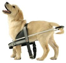 Guide Dogs Australia: Providing people with a vision impairment with independence and safer mobility.