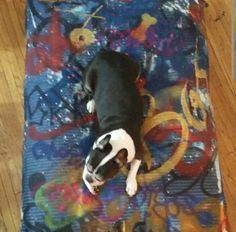 Custom Graffiti Doggie Bed
