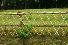 dividir terreno com cerca de bambu