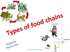 With a very good response and high demand from buyers/sellers of the FOOD CHAIN module we are very happy to launch one more module which is associated with various TYPES of FOOD CHAIN in our ecosystem. Starting from types to the working of it is explained in a very smooth manner with colorful pictures. It will be useful to the teachers and students of grades 2nd, 3rd, 4th, 5th, 6th, 7th and 8th in their ECOSYSTEM UNITS. 4th Grade Science, Elementary Science, Life Science, Food Chain Activities, Art Activities, Science Ideas, Environmental Science, Types Of Food, Colorful Pictures